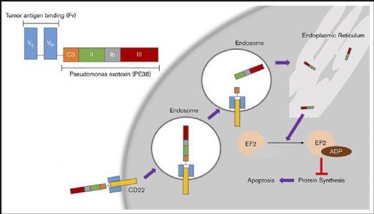毛细胞白血病治疗新进展
