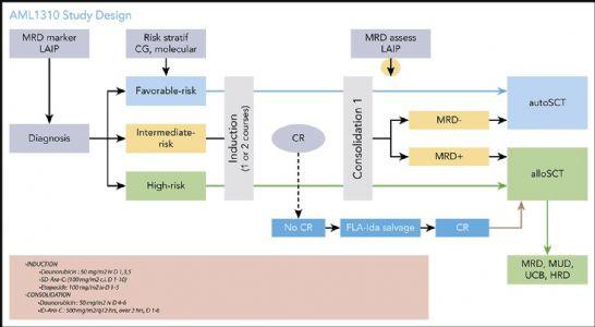对初治急性髓系白血病的年轻患者进行适应风险、以MRD为导向的分层治疗